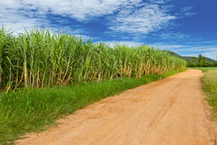 Sugar cane farmland Royalty Free Stock Image