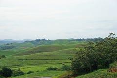 SUGAR CANE-FELDER IN KWAZULU NATAL stockfotos