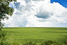 Sugar cane field. With dramatic sky stock images