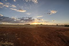Sugar cane field after harvest at sunset. Photo of sugar cane field after harvest at sunsetn Stock Photography