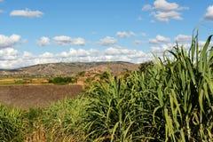 Sugar cane Royalty Free Stock Photos