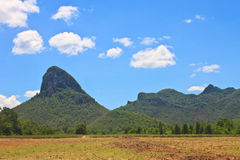 Sugar cane field near a mountain and blue sky Royalty Free Stock Photos