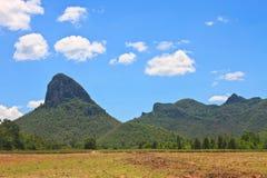 Sugar cane field near a mountain and blue sky Royalty Free Stock Photos