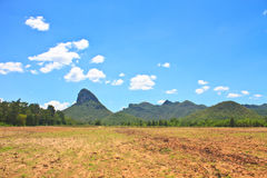 Sugar cane field near a mountain and blue sky Stock Image
