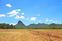 Sugar cane field near a mountain and blue sky Stock Image
