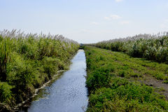 Sugar Cane Fields  And Canal Royalty Free Stock Photos