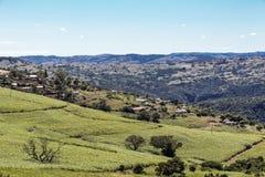 Sugar Cane Fields ed alloggio contro l'orizzonte rurale del paesaggio Immagini Stock