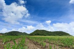 Sugar cane fields from Mauritius Island, Indian Ocean. Africa stock photography
