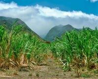 Sugar Cane Fields op Maui, Hawaï in 1990's royalty-vrije stock afbeeldingen