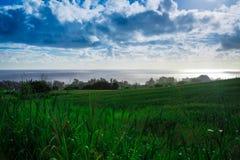 Sugar Cane Fields y Hawaii admitida océano Imágenes de archivo libres de regalías