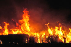 Sugar cane fire. Most farmers burn before harvesting the sugar cane Royalty Free Stock Image