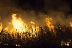 Sugar cane fire. In Brazil Royalty Free Stock Image