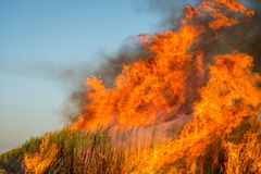 Sugar Cane in Flames Stock Images