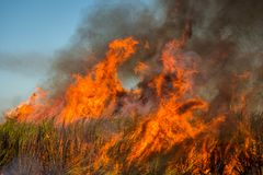 Sugar Cane in Flames Stock Photo