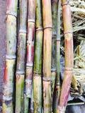 Sugar Cane frais Images stock