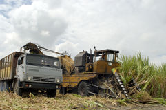 Sugar cane harvest in CUBA royalty free stock photo