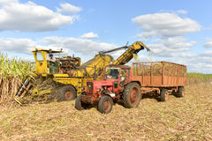 Sugar Cane Harvest Royalty Free Stock Photography