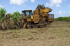 Sugar Cane Harvest by Machine. Harvest machines roll through the sugar cane field.A machine for harvesting sugar cane runs on a pair of driving wheels and a pair Stock Image