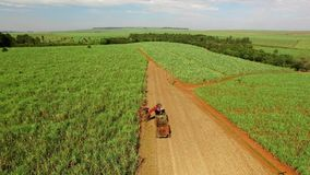 Sugar cane harvest in sunny day in Brazil - aerial view - Canavial.  stock video footage