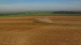 Sugar cane harvest in sunny day in Brazil - aerial view - Canavial.  stock video
