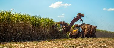 Sugar cane hasvest plantation field royalty free stock image