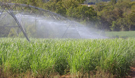Sugar cane irrigation Stock Photos