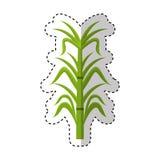 Sugar cane isolated icon Royalty Free Stock Photo