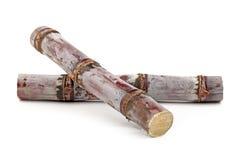 Sugar cane. Isolated on white background Stock Photos