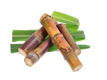Sugar cane isolated on white background Royalty Free Stock Photo