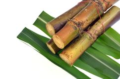 Sugar cane isolated on white background Stock Photography