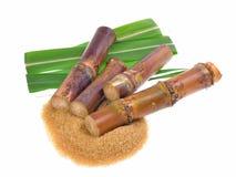 Sugar cane isolated on white background Stock Image