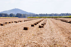 Sugar Cane mulch bales sitting in field with crop and mountains Royalty Free Stock Photography