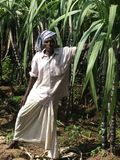 Sugar Cane owner after tsunami Royalty Free Stock Image