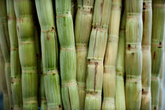 Sugar cane peeled. Raw green sugar cane peeled Royalty Free Stock Image
