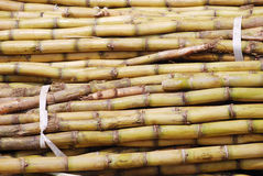 The sugar cane pile Stock Image