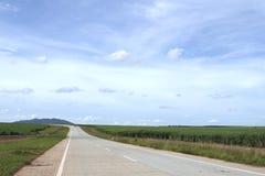 Sugar cane plantation. An empty road going through a sugar cane plantation Royalty Free Stock Photography