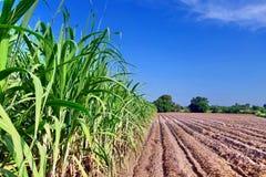 Sugar cane plantation Royalty Free Stock Photos