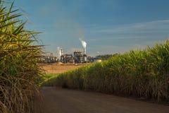 Sugar cane plantation road Stock Photo