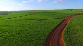 Sugar cane plantation in sunny day in Brazil - aerial view - Canavial stock video