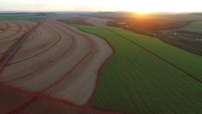 Sugar cane plantation in sunset in Brazil - aerial view - Canavial stock video