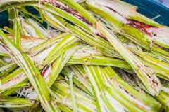Sugar cane for recycling energy Sugarcane bagasse reuse for nature fiber paper and biofuel recycle fuel Stock Photography