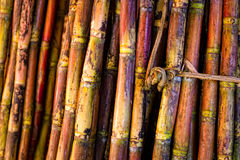 Sugar Cane Sticks Royalty Free Stock Photos