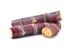 Sugar Cane su bianco Fotografia Stock Libera da Diritti