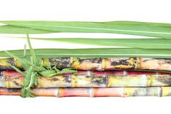 Sugar cane, Sugarcane heap and leaves, Pile of Cane, Sugarcane piece fresh, Sugar cane on white background, Sugarcane fresh. The Sugar cane, Sugarcane heap and stock photo