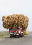Sugar Cane Transport. An oversized load of raw sugar cane is transported down a coastal highway in Peru Stock Photos