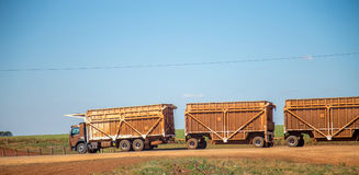Sugar cane transporter Stock Photo