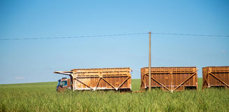 Sugar cane transporter Stock Images
