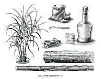 Free Sugar Cane Tree With Product Collection Illustration Vintage Engraving Style Black And White Clipart Isolated On White Background Stock Photo - 183556610