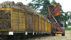 Sugar cane truck. A sugar cane truck empties a load of cut cane into a bin in far north Queensland, Australia stock footage