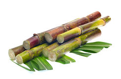 Sugar cane on white background Stock Photos